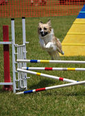 Mixed-breed dog leaping over a jump — Stock Photo