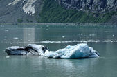 Iceberg from Tidewater Margerie Glacier — Stock Photo