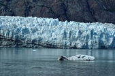Iceberg and Tidewater Margerie Glacier — Stock Photo
