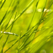 Abstract grass — Stock Photo #2554310