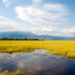 Marshland — Stock Photo