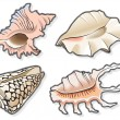 Seashells - Stock Vector