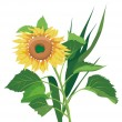 Stock Vector: Photo-real sunflower