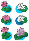 Lotus flowers — Stock Vector