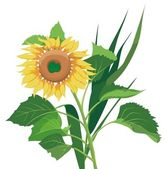 Photo-real sunflower — Stock Vector