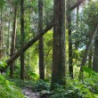 Forest footpath — Stock Photo #2242923