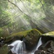 Misty cascade — Stock Photo #2243364