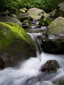 Wild stream — Stock Photo
