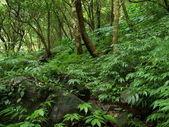 зеленый лес — Стоковое фото