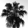 Palm tree silhouette — Stock fotografie #2464048