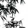 Royalty-Free Stock Photo: Silhouette of bamboo leaves
