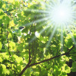 Stock Photo: Sunlight through foliage