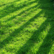 Patterns on grass — Stock Photo #2464563