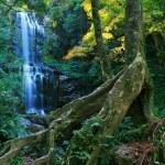 Autumn forest waterfall — Stock Photo