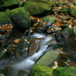 Autumn wild stream — Stock Photo