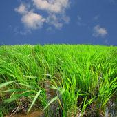 Zelené trávě s modrou oblohou — Stock fotografie