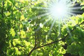 Sunlight through foliage — Stock Photo
