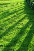 Patterns on grass — Stock Photo