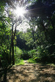 Sunlight through forest — Stok fotoğraf