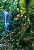Herbst wald wasserfall — Stockfoto