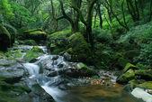 Spring cascade — Stock Photo