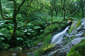 Forest cascade — Stock Photo
