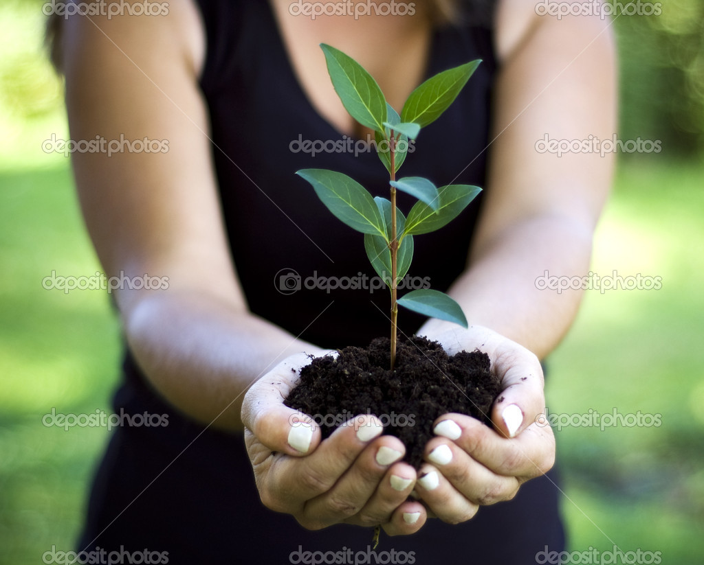 Plant in hand  Stock Photo #2141865