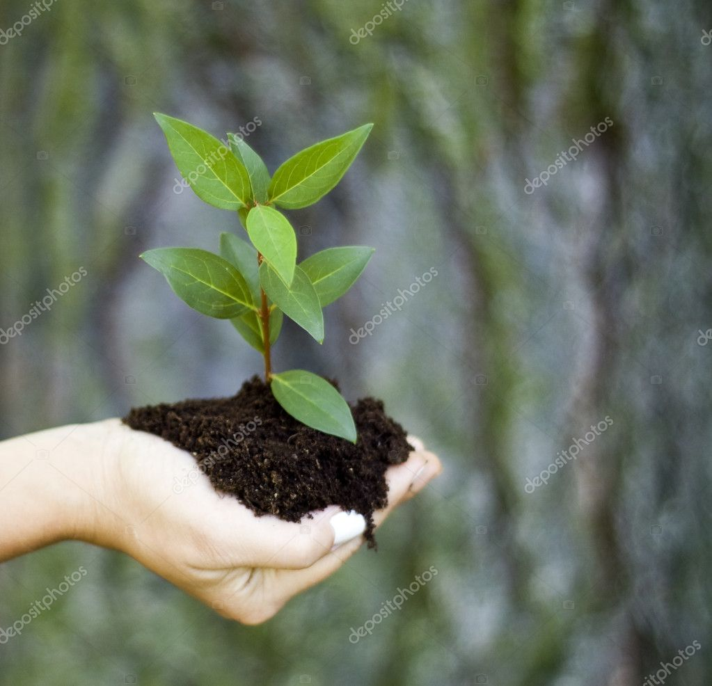 Plant in hand — Stock Photo #2141871