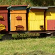 Bee hives - Stock Photo