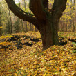 Стоковое фото: Autumnal forest with colorful leafs