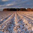 Field covered by snow — Stock Photo #2318732