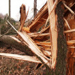 Damaged trees — Stock Photo