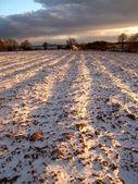 Kış alan — Stok fotoğraf
