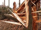 Damaged trees — Stock Photo