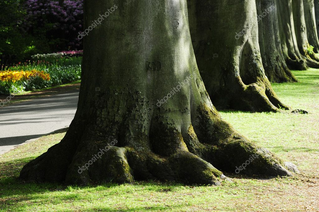 Root of forest — Stock Photo #2096755