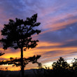 Sunset glory and pine tree — Stock Photo