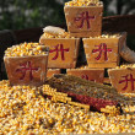 Harvest of corn — Stock Photo