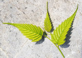Pattern of green leaf — Stock Photo