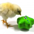 Chicken play with toy — Stock Photo #2260791