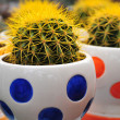 Cactus in cute basin — Stock Photo