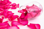Petali di rosa — Foto Stock