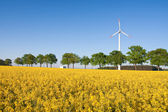 Windmill farm in the rape field — Stock Photo
