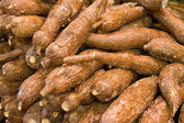 Cassava — Stock Photo