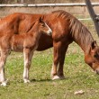 Stock Photo: Mare and foal