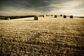 Típico paisaje de la toscana — Foto de Stock