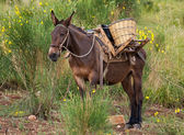Mule in bushes — Stock Photo