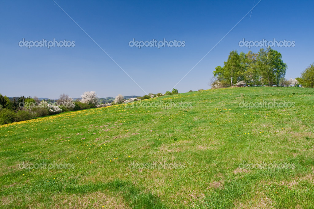 Green farmland in the springtime — Stock Photo #2421872