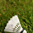 Royalty-Free Stock Photo: Badminton shuttlecock