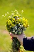 Child hand with flowers — Stock Photo