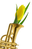 Yellow tulip in gold trumpet romantic — Stock Photo